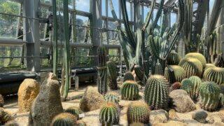 京都府立植物園の温室